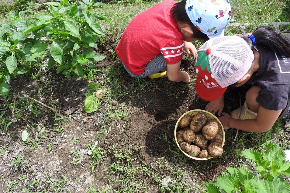 子どもと楽しむ!家庭菜園で食育しながらエコ生活