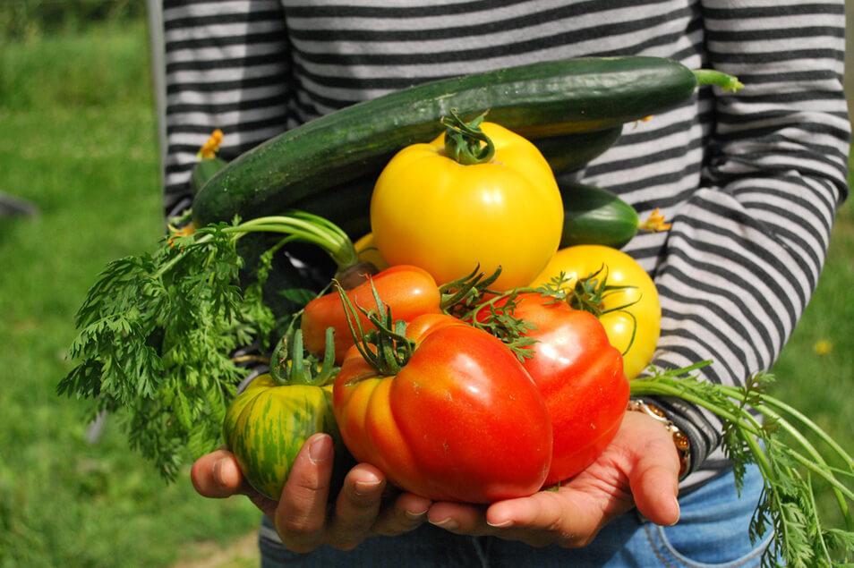 子どもと楽しむ家庭菜園のポイントは?食について学ぼう