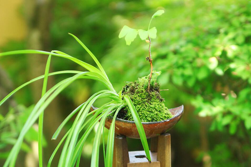 苔玉の作り方を伝授♡エコ・簡単・おしゃれな癒しアイテムに注目