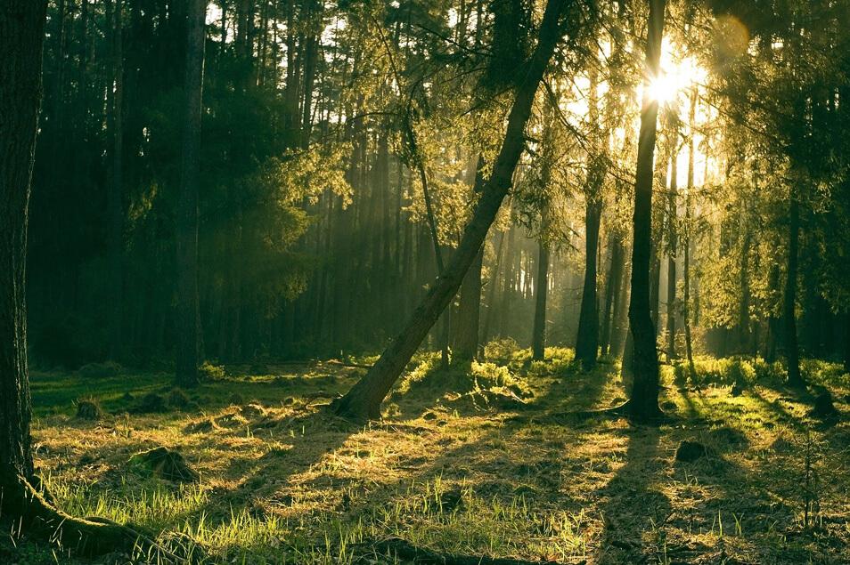 【世界の森林のために】FSC認証の製品を選ぶだけでエコに貢献できるって知ってた?